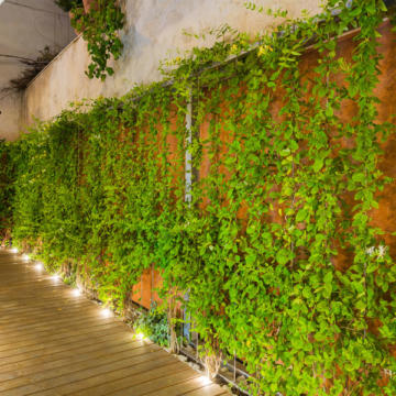 Green Wall and Handrail in Roof garden of Jyane Company